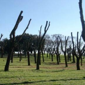 Roma: per un nuovo regolamento del verde