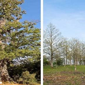Valle dell'Agri, Basilicata: giganti verdi abbattuti