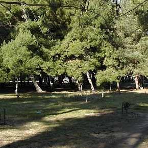 Montesilvano (Pescara): disboscamento della pineta nella riserva di Santa Filomena