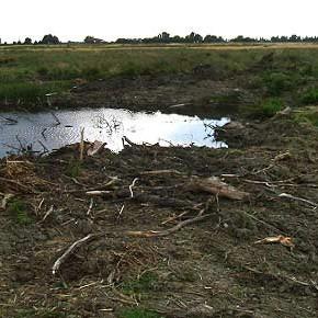 A Poggetto (Ferrara) la lunga storia della distruzione di un'oasi