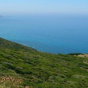 Sardegna: la costa dei grifoni minacciata da un'assurda legge regionale