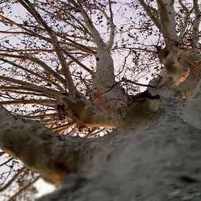 Finalmente anche in Italia una legge sulla tutela degli alberi monumentali!
