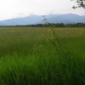 Fotovoltaico nel parco della Vauda: la Belectric ricorre al TAR contro la provincia