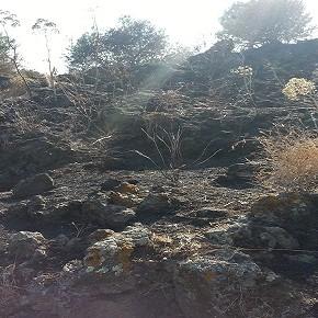 Abbandonato e incendiato: è il Parco Gioeni di Catania