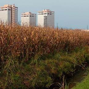 """Grande assente al primo """"Agricoltura Milano Festival"""": il consumo di suolo"""