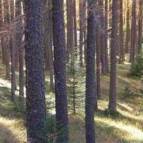 Proprietà collettiva: valorizzare e tutelare i boschi con la gestione diretta della comunità