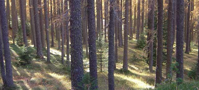 20131101-alberi