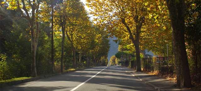 20131120-alberi