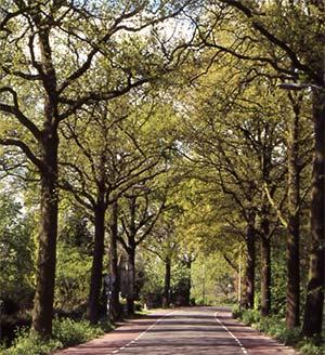 20131120-alberi2