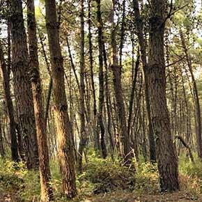 La Liguria e i propri boschi pubblici: schizofrenia di un'amministrazione regionale