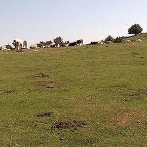 Interrogazione del M5S per difendere Caldarosa (Basilicata) dalle trivelle dell'Eni