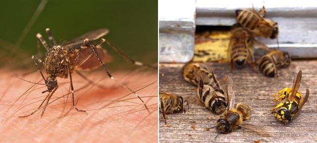 zanzare-api