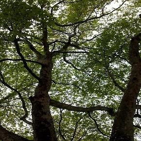 Le cattive pratiche nella gestione del verde pubblico