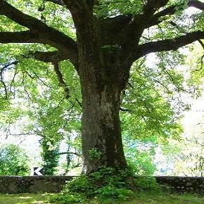 A scuola dagli alberi per scoprire quanto sono importanti
