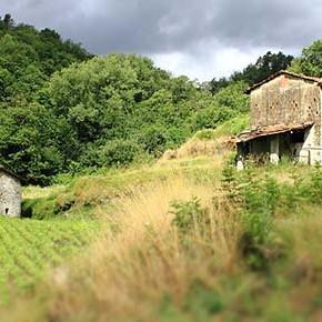 Lettera in difesa della terra a Pignone (Liguria)