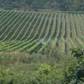 In Veneto nascono i GAST (Gruppi di Acquisto Solidale di Terreni) contro la monocoltura del prosecco