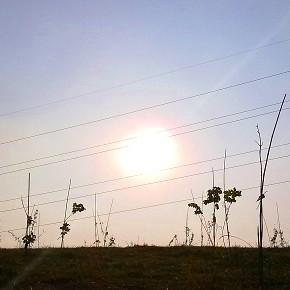 """Terna vuole """"mangiarsi"""" centomila mq di Parco Sud Milano. Agricoltori e ambientalisti: """"Si usino aree industriali dismesse"""""""