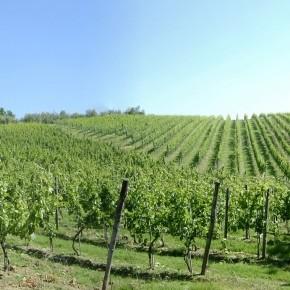 In Toscana il settore vitivinicolo vuole affossare il Piano Paesaggistico di Anna Marson