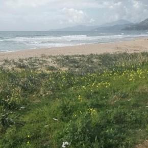 Il Club ELEA per l'UNESCO a difesa del giglio di mare sulle coste del Cilento
