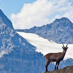 Lettera Appello per la salvaguardia del Parco Nazionale dello Stelvio