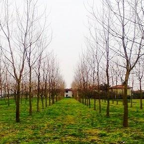 Leggi regionali sul consumo di suolo: tra definizioni e limiti, un percorso ancora incerto