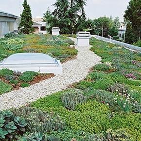 Erba e piante sul tetto: per risparmiare ed abbellire, ma anche per mangiare!