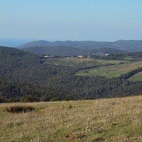 A chi interessa tutelare l'ambiente delle colline livornesi?