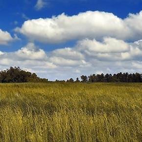 Passi avanti verso l'arresto del consumo di suolo: lenti ma inesorabili…