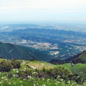 Fermare il dilagare della monocoltura a Prosecco nell'area Grappa, Asolo, Montello