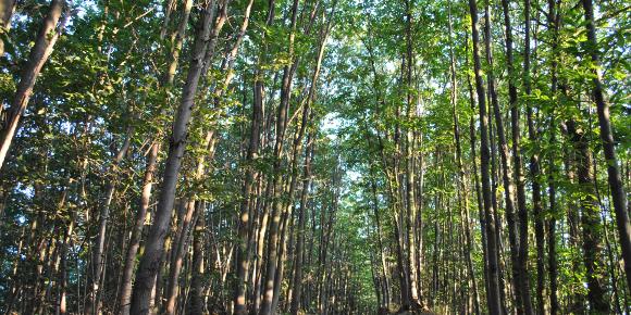 Le evidenze scientifiche confermano: tagliare e bruciare estesamente alberi incrementa malattie, morti precoci e cambiamenti climatici