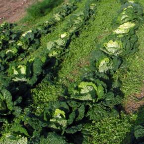 Nasce una piattaforma per l'uso sostenibile del suolo