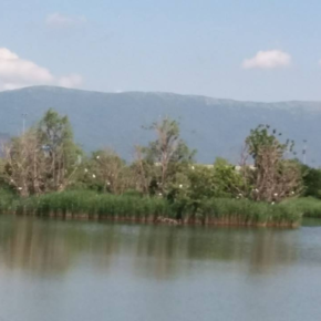 Gli sfalci distruttivi della vegetazione ripariale in Toscana