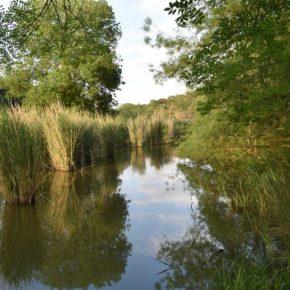 Parco Migliarino – San Rossore – Massaciuccoli: le associazioni ambientaliste si mobilitano