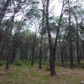 Il progetto immobiliare sulla costa di Torregrande non può essere realizzato