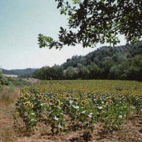 Si preparano autostrade amministrative in favore della speculazione immobiliare nei parchi naturali del Lazio