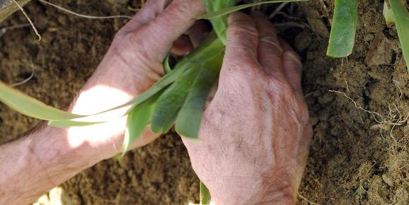 Legge contro il consumo di suolo: vengo anch'io...
