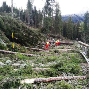 Dopo la tempesta Vaia. Riflessioni per il recupero delle foreste nelle Dolomiti