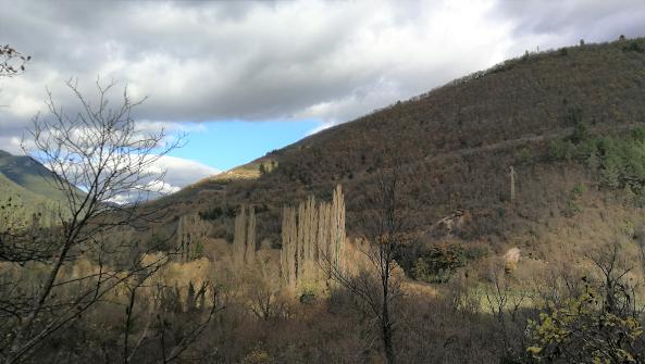 Risultati immagini per fondo forestale italiano