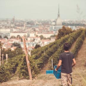 Alla scoperta dei vigneti urbani d'Italia: un viaggio nel tempo passeggiando fra i filari sopravvissuti nelle cittá
