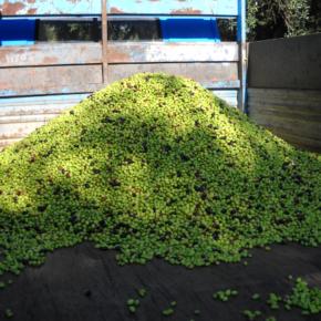 Prima l'alimentazione, poi il biogas