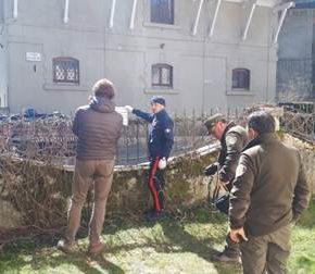 Risposta ai barbari nemici del Parco d'Abruzzo