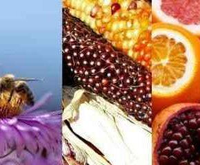 Lo stato di salute degli ecosistemi e la preoccupazione degli europei per la perdita di biodiversità