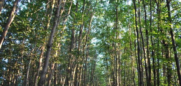 Una norma per gli alberi