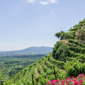 Colline del Prosecco Docg: uno studio stima l'erosione del suolo