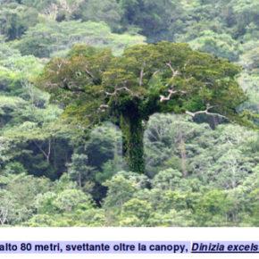 La grande guerra agli alberi