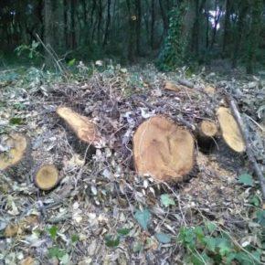 I Carabinieri Forestale denunciano alla Magistratura i tagli boschivi nella Riserva naturale statale del Litorale Romano