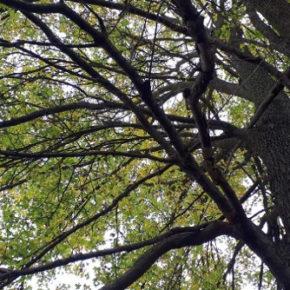 Decreto 10 marzo 2020 Ministero dell'Ambiente CAM per la gestione del verde pubblico. Un nuovo passo avanti nella tutela e valorizzazione del patrimonio arboreo