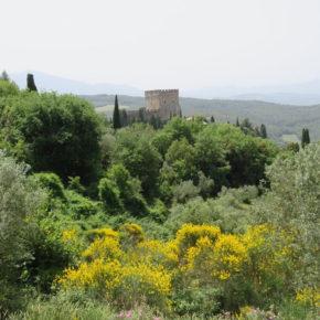Verde urbano e salute: esce la Risoluzione del Convegno di San Rossore