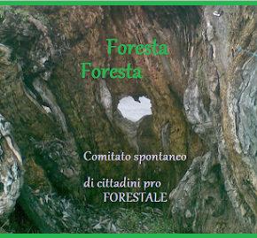 La Corte Europea dei Diritti dell'Uomo mette in discussione la soppressione del Corpo Forestale