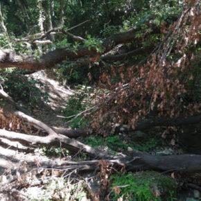 Preoccupazioni per il Bosco di Valcanneto, bene da salvaguardare